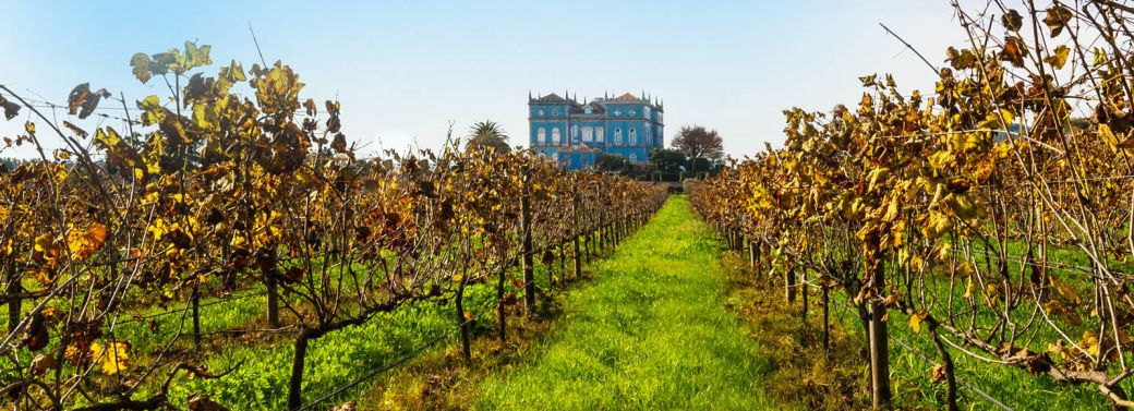 WINE ESTATE FOR SALE IN PORTUGAL, VINEYARDS & WINERY, LUXURY MANOR VILLA FOR SALE