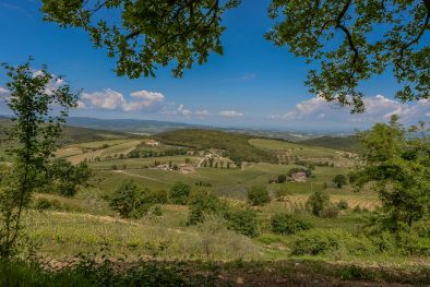 PRESTIGIOUS BRUNELLO WINE ESTATE FOR SALE ON THE HILLS OF MONTALCINO, TUSCANY
