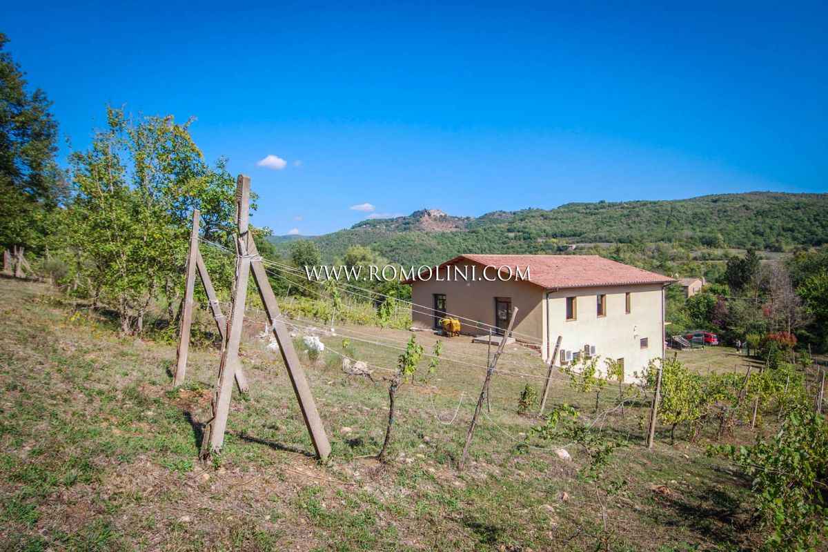 ORVIETO, UMBRIA: CELLAR WITH 4.5 HA VINEYARDS FOR SALE, WINE ESTATE, VINEYARD
