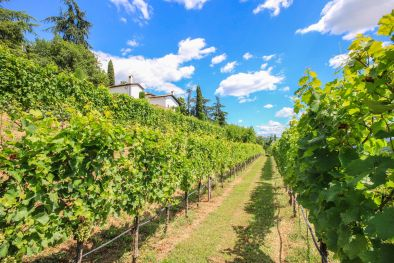 ESTATE WITH VINEYARD FOR SALE IN GORIZIA, FRIULI-VENEZIA GIULIA | Romolini
