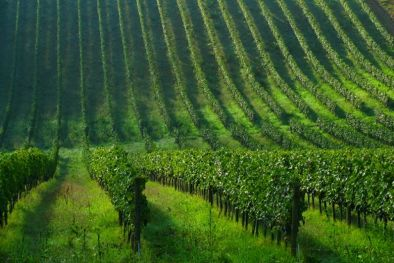 TUSCAN WINE ESTATE WITH VINEYARD FOR SALE FLORENCE