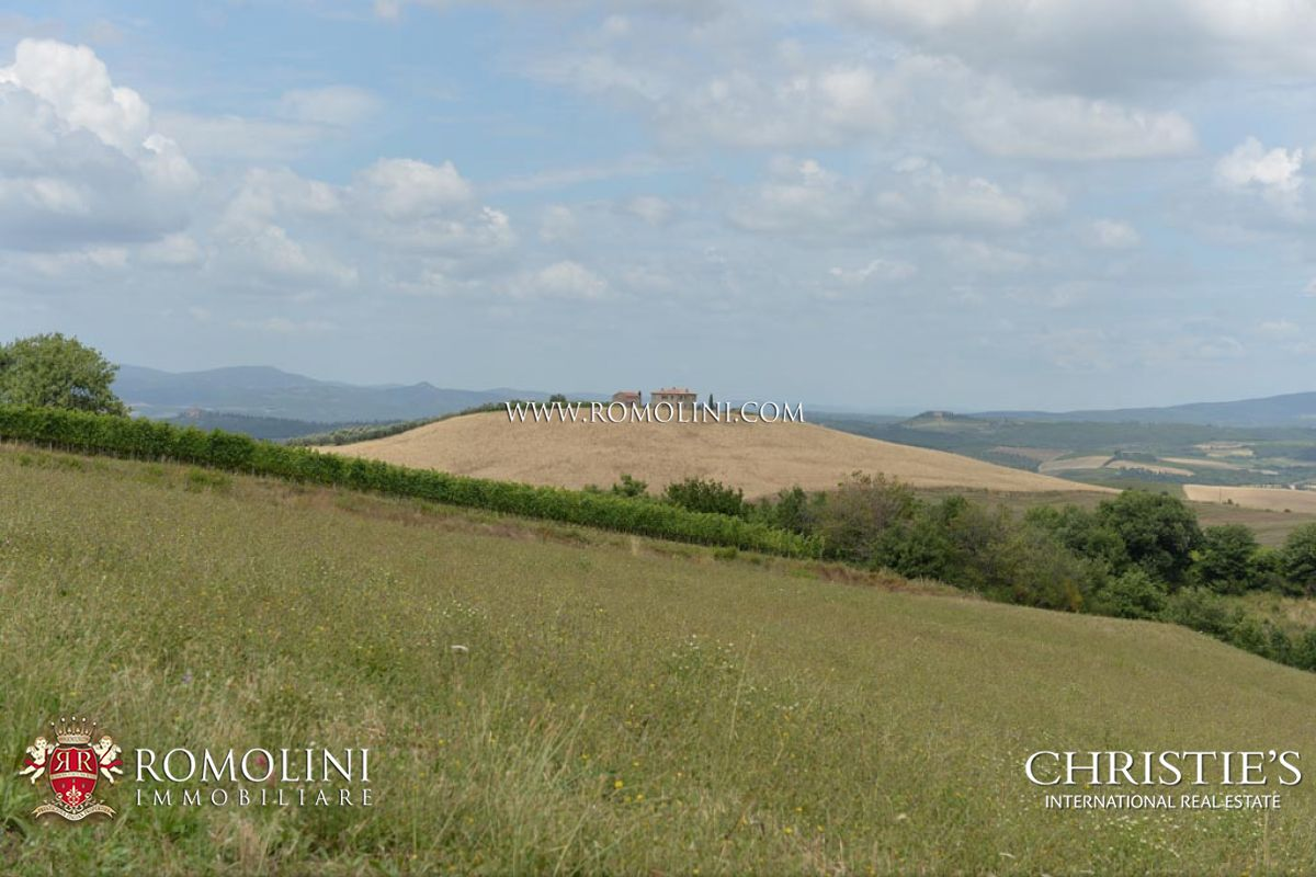 VINEYARD FOR SALE IN TUSCANY, VAL D'ORCIA