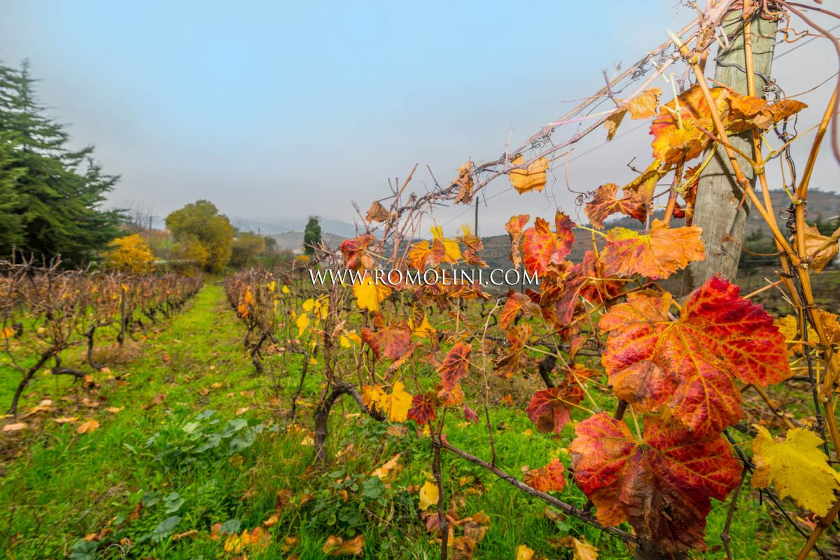 SMALL VINEYARDS, WINERY AND HOME FOR SALE IN PORTUGAL, LAMEGO