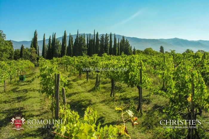 VINEYARDS ESTATE FOR SALE IN FLORENCE, RIGNANO SULL'ARNO