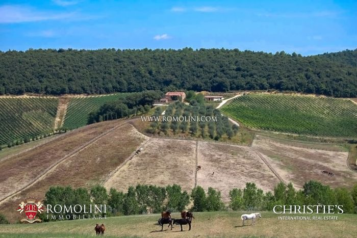 Farm estate with wine and horse for sale in Siena Tuscany