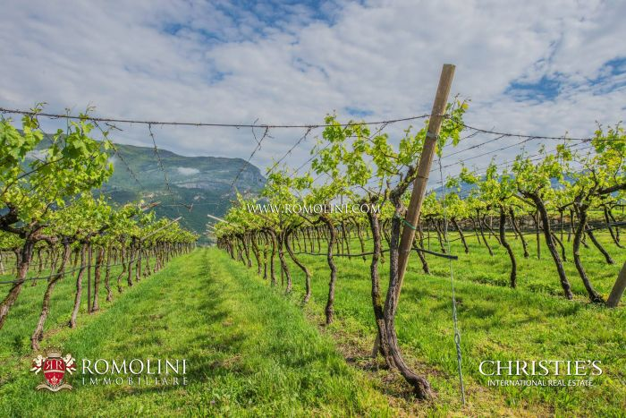 MASO TRENTINO, WINE ESTATE, VINEYARDS WINERY FOR SALE (Gewürztraminer, Traminer, Merlot, Cabernet, Chardonnay, Moscato)