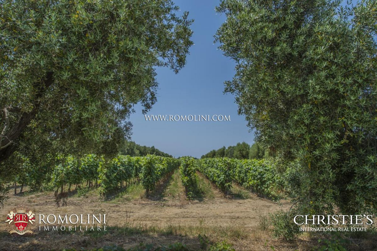 BOLGHERI WINE ESTATE WITH CELLAR, VINEYARDS FOR SALE IN BOLGHERI, Bolgheri Superiore, Bolgheri DOC