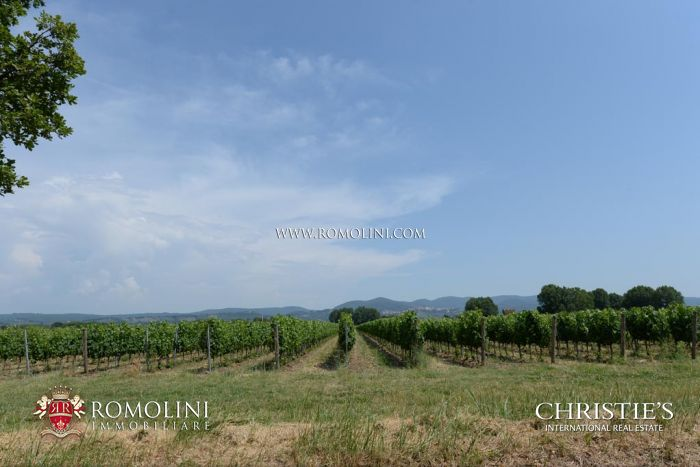 BOLGHERI WINE ESTATE WITH VINEYARDS FOR SALE IN ITALY, Bolgheri Superiore, Bolgheri DOC