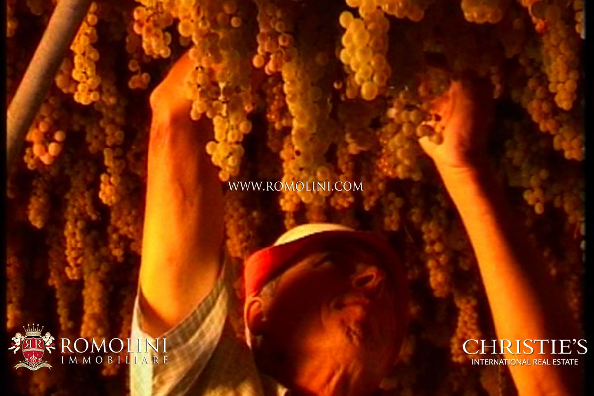 WINE AND OIL PRODUCING ESTATE FOR SALE CERTALDO ǀ Chianti DOCG Wine, IGT, extra virgin olive oil