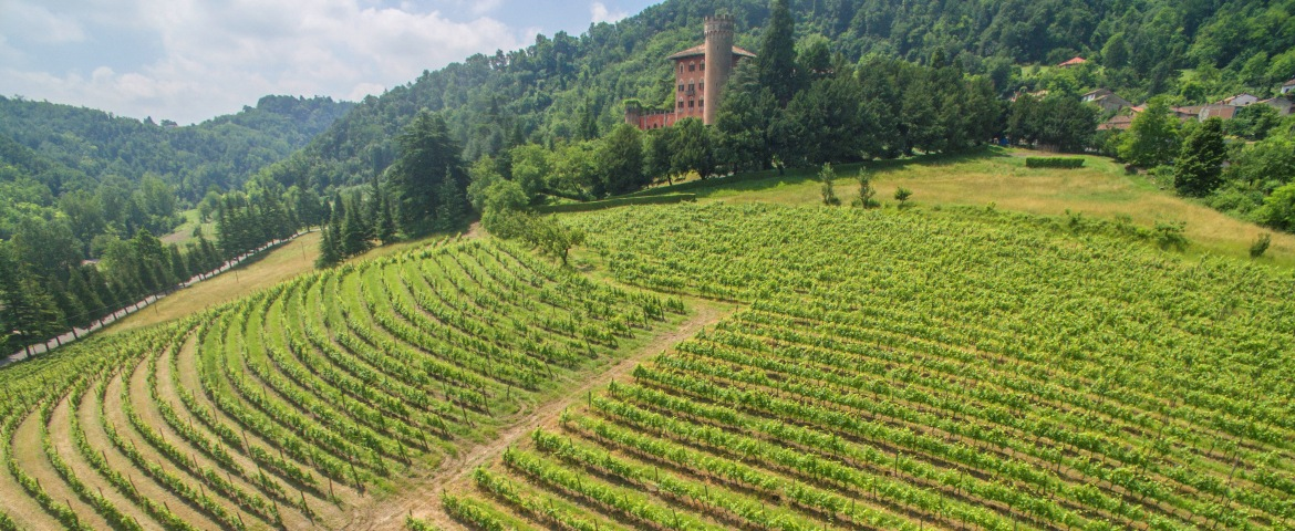 A beautiful Piedmontese castle with its vineyards along the slope of the hill
