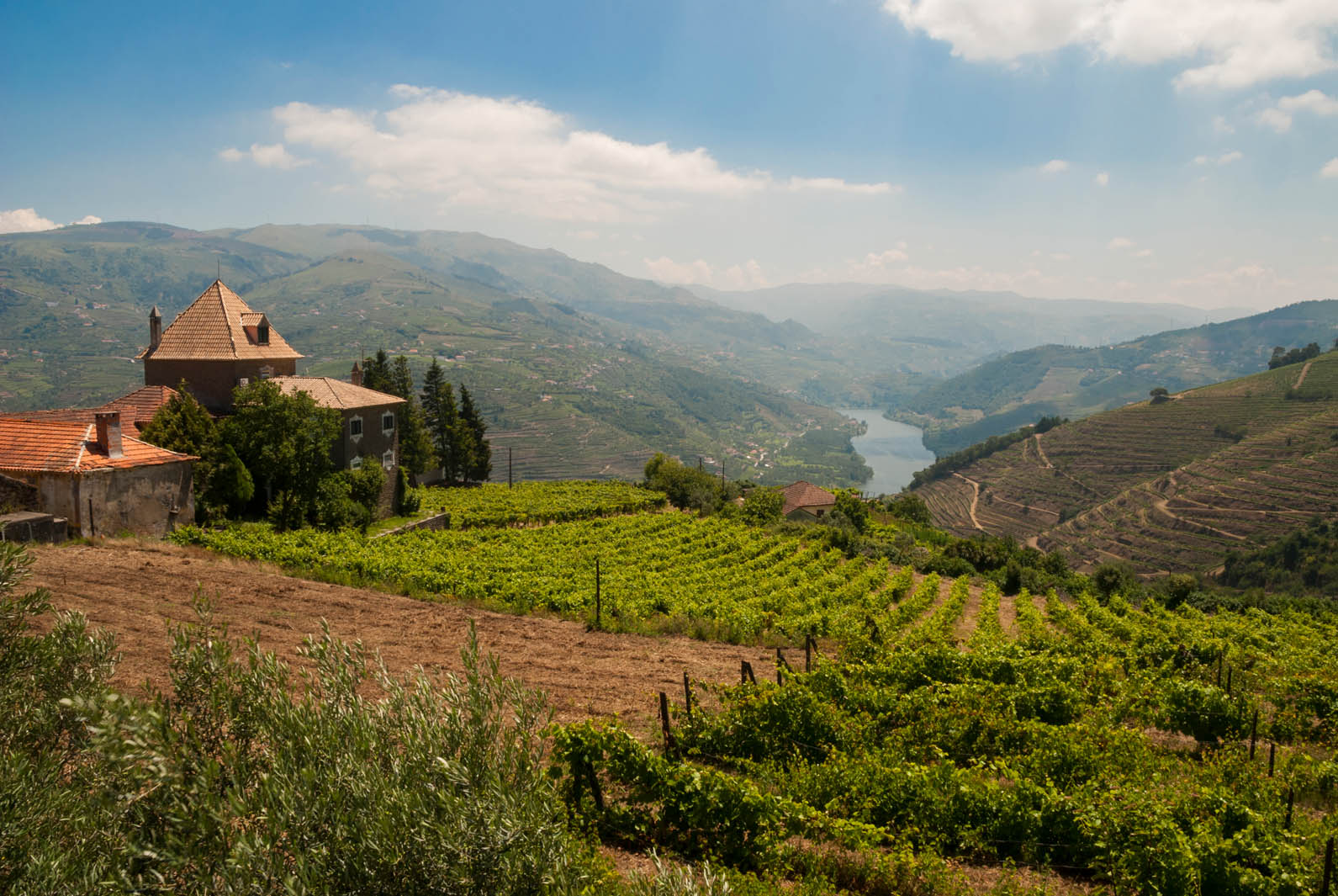 Vineyards & Wineries Portugal