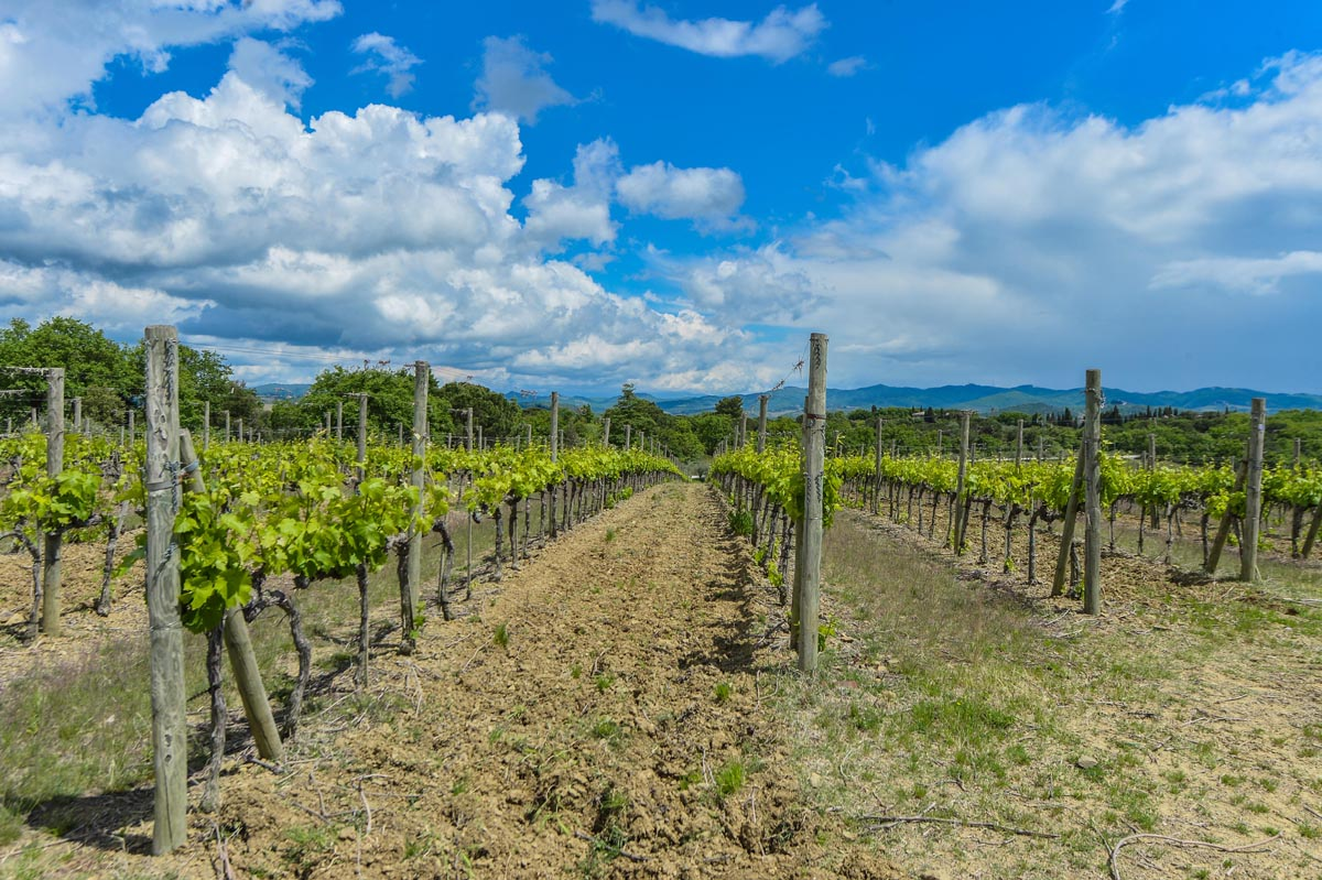 Vineyards & Wineries Tuscany